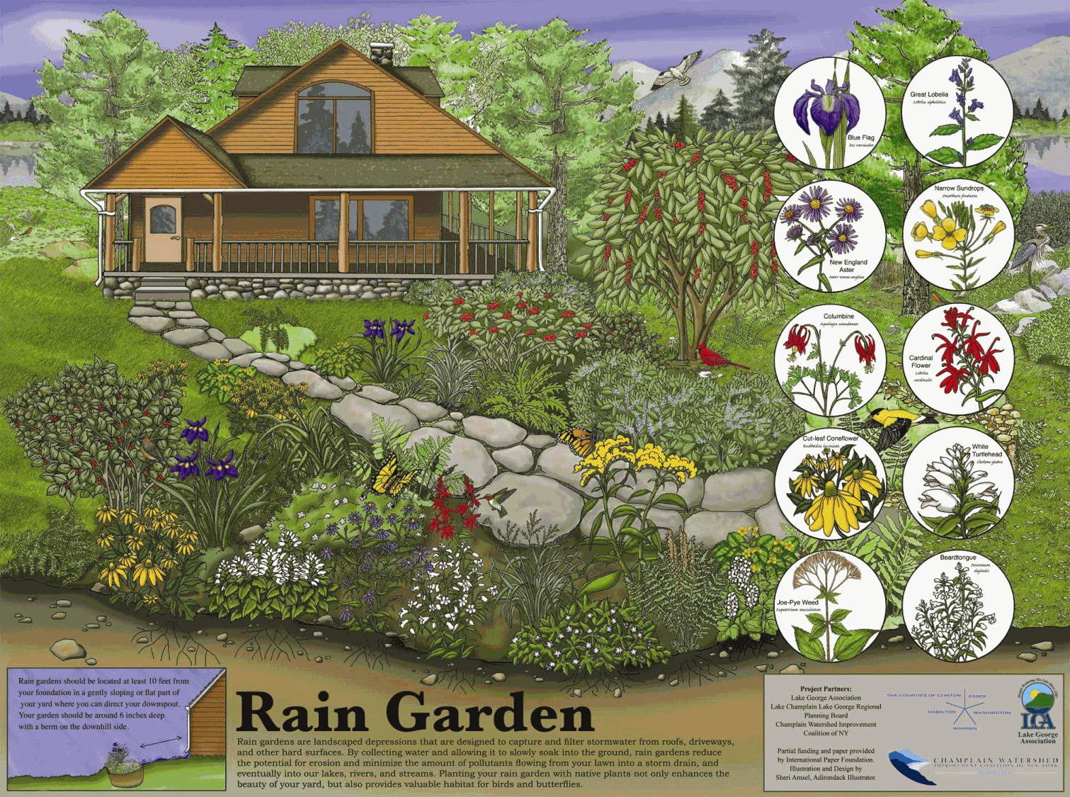 Rain Garden Design rain garden diagram Photos Of Rain Gardens New Rain Garden Poster And Presentation