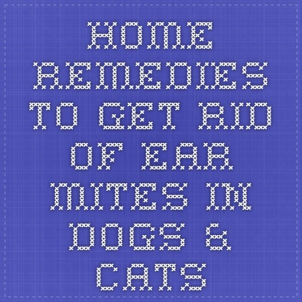 Home Remedies To Get Rid Of Ear Mites In Dogs Cats Dog Remedies Cat Remedies Dog Ear Mites
