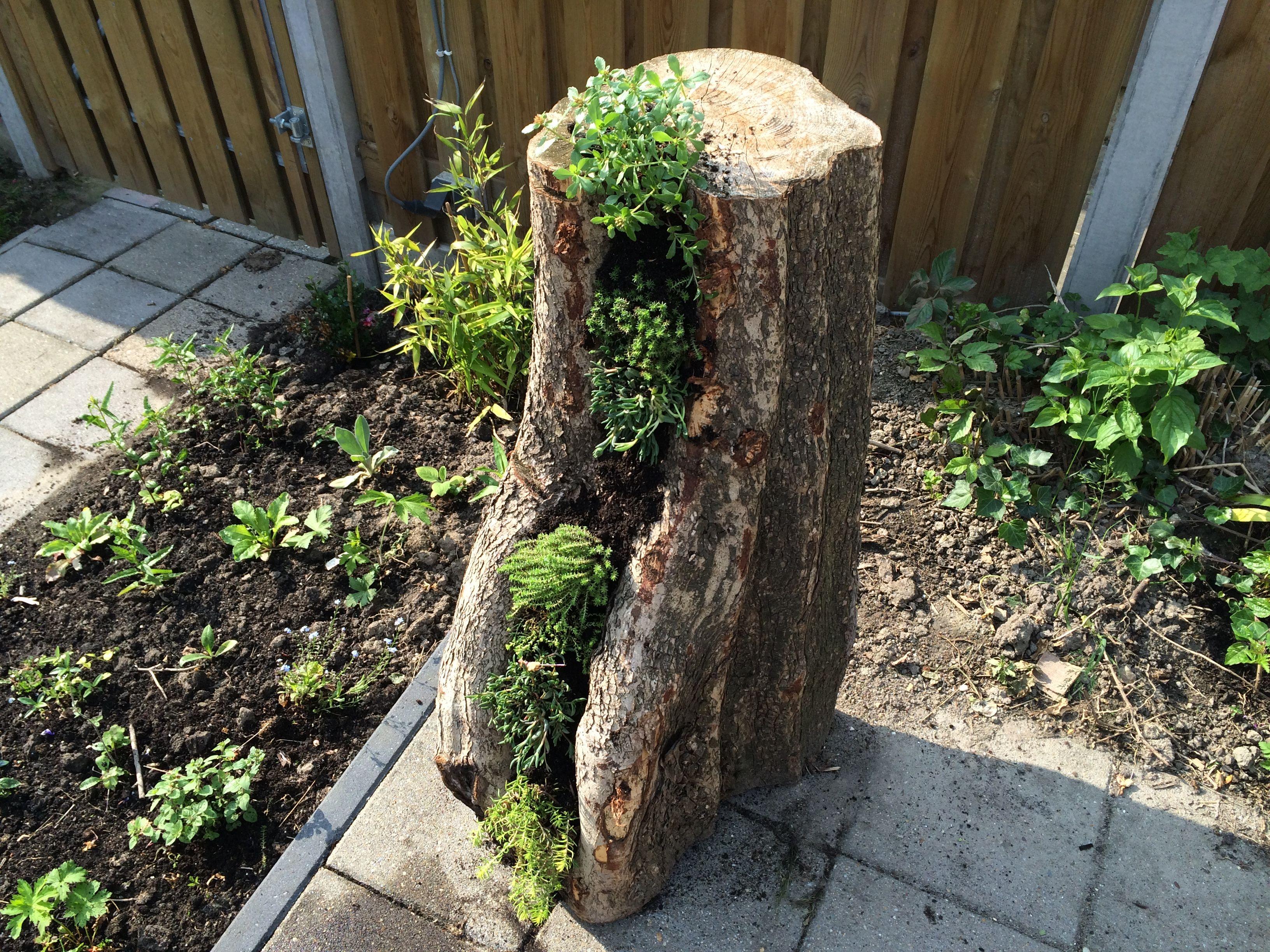 Stronk Met Rotsplantjes Tuin Ideeen Tuinplanten Tuin