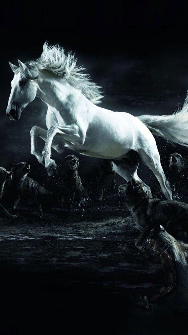 Cavallo assalito dai lupi