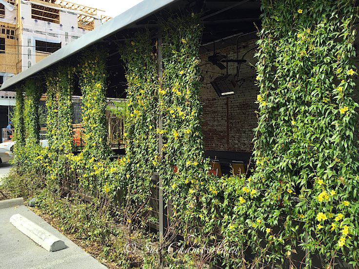 Jasmine vine was planted to create their own outdoor eating room ...