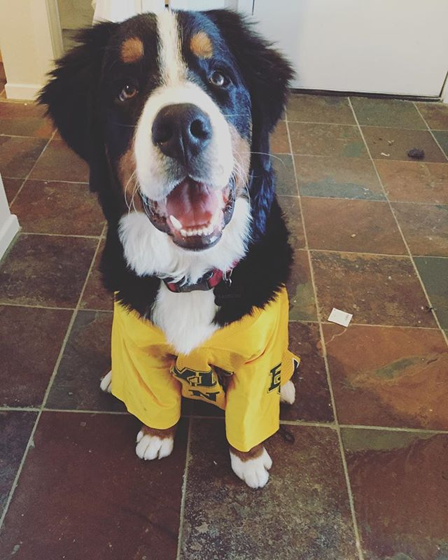 e9af2ad9971 Fact: Baylor Line jerseys fit dogs perfectly. #SicEm | Baylor Pets ...