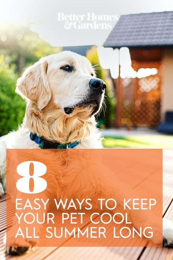 b5ecd9b75553202e31c3094252d39a11 - Better Homes And Gardens Pet Competition