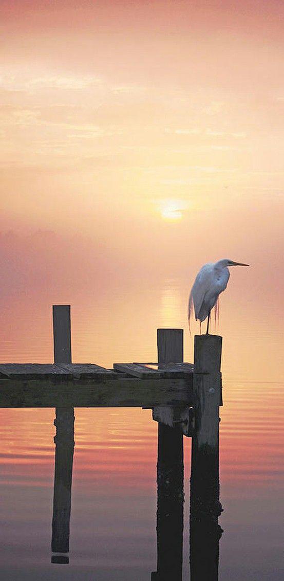 Egret in foggy sunset