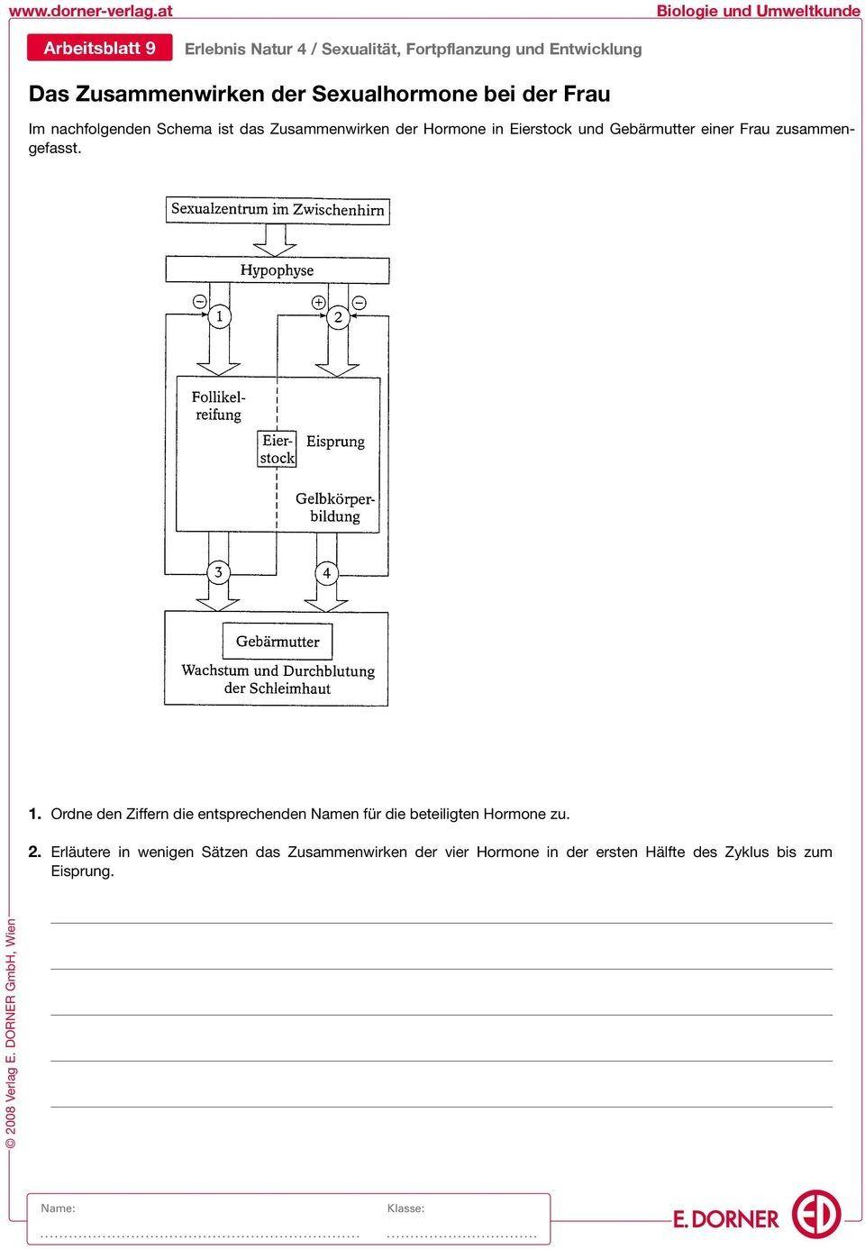 25 Antwortschlüssel Für Den Fotosynthese Arbeitsblatt | Bathroom ...