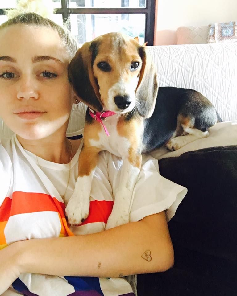 Miley Cyrus Raises Awareness For Animal Testing By Adopting