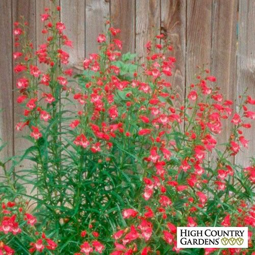 Drought Tolerant Front Yard: High Country Gardens, Front Yard