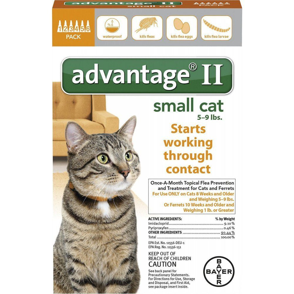This New And Improved Formula Will Kill Fleas Completely By Eliminating Their Eggs And Larvae By Using A Variety Of Http Small Cat Cat Fleas Treatment Fleas