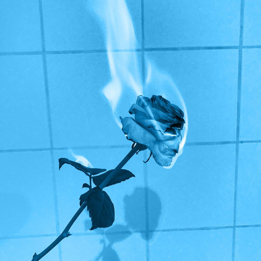 image result for blue aesthetic rose pinterest blue aesthetic