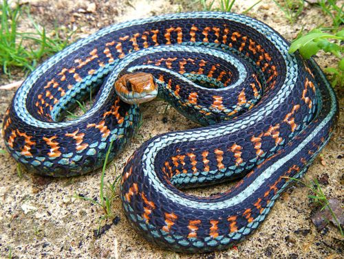 I M Terrified Of Snakes But That Is The Prettiest Snake