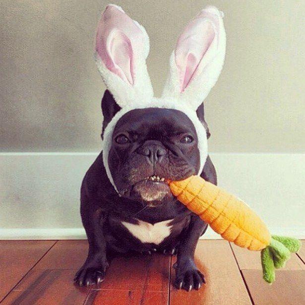 Bom dia Páscoa!  #felizpascoa #paz #renovacao #muitochocolate by larinmonteiro