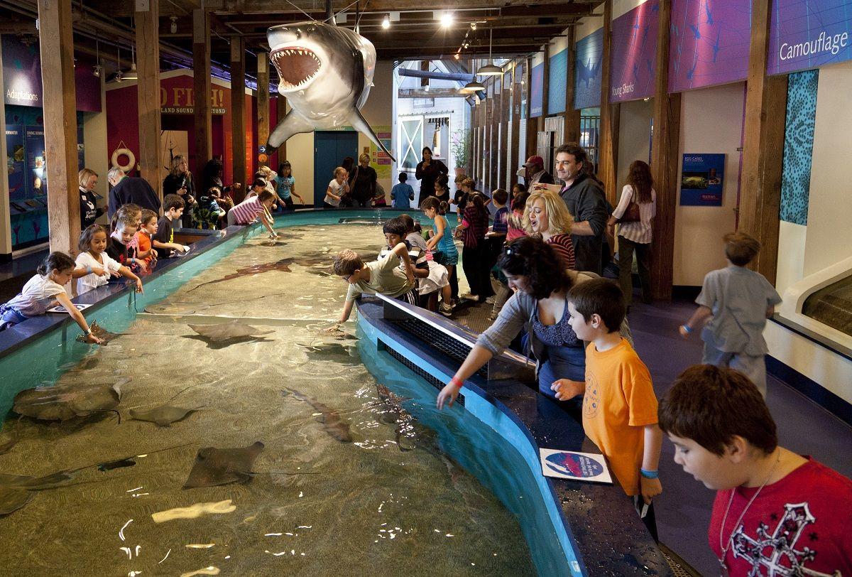 Maritime Aquarium Norwalk, CT Dimensions: 37′ x 12 'x 4