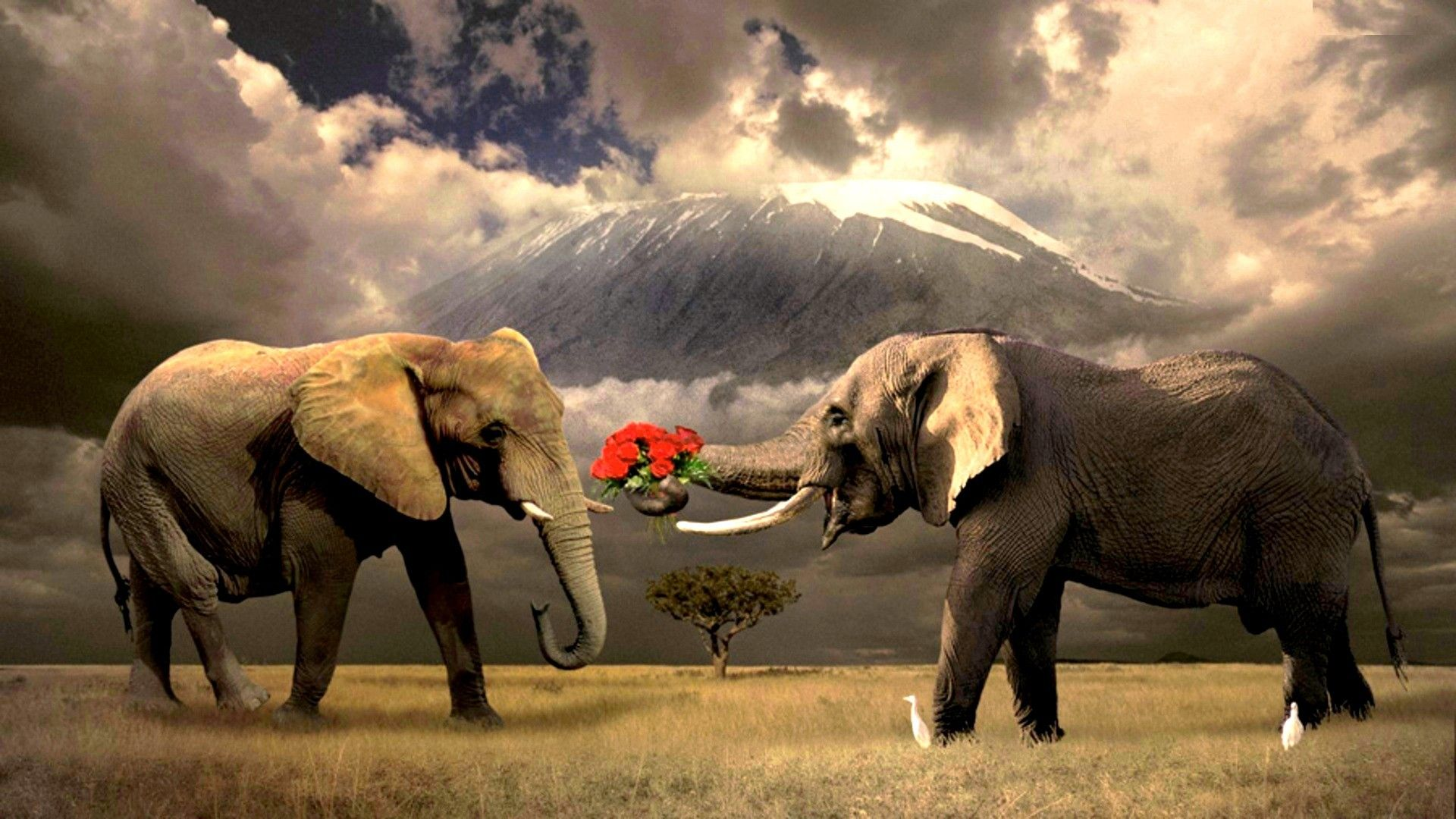 Hd wallpaper elephant - Hd Elephant Wallpaper 1080p Wallpapers Hd Wallpapers Pictures