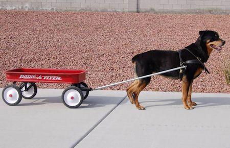 Dog Cart Harness Dog Pulling Harness Leather Dog Harness H5