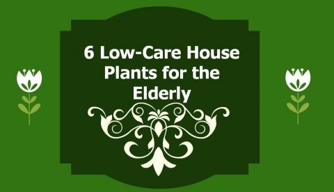 6 Best Houseplants for the Elderly