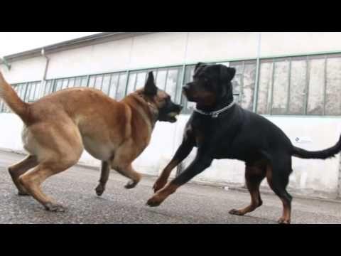 dog sounds like dmx