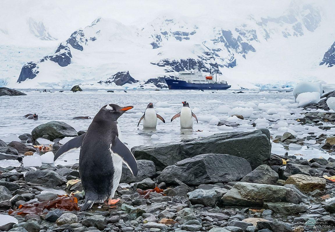 Penguins In Antarctica 5 Airpano Photo