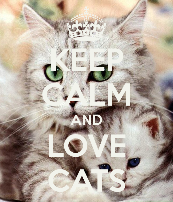 KEEP CALM AND LOVE CATS. Cats, Cute cats and kittens