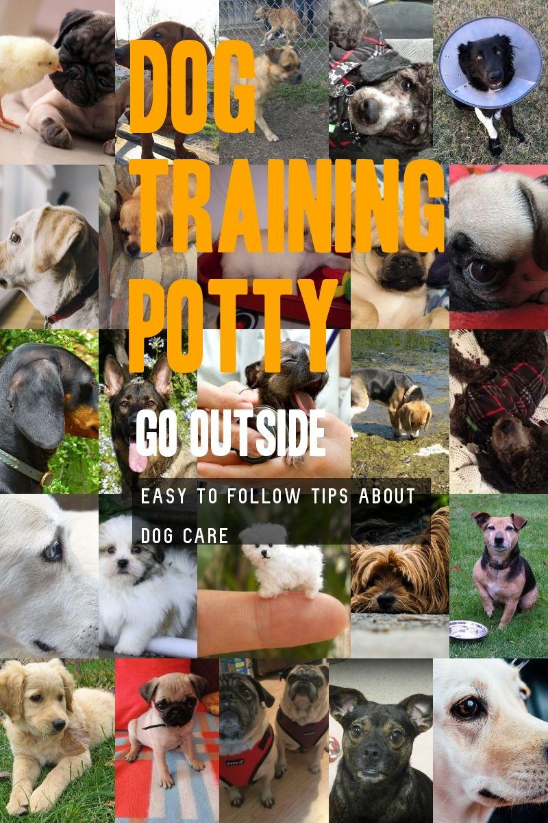 Great Tips To Help On Dog Training Potty Go Outside You Can Find Out More Details At The Link Of The Imag Dog Training Dog Potty Training Basic Dog Training