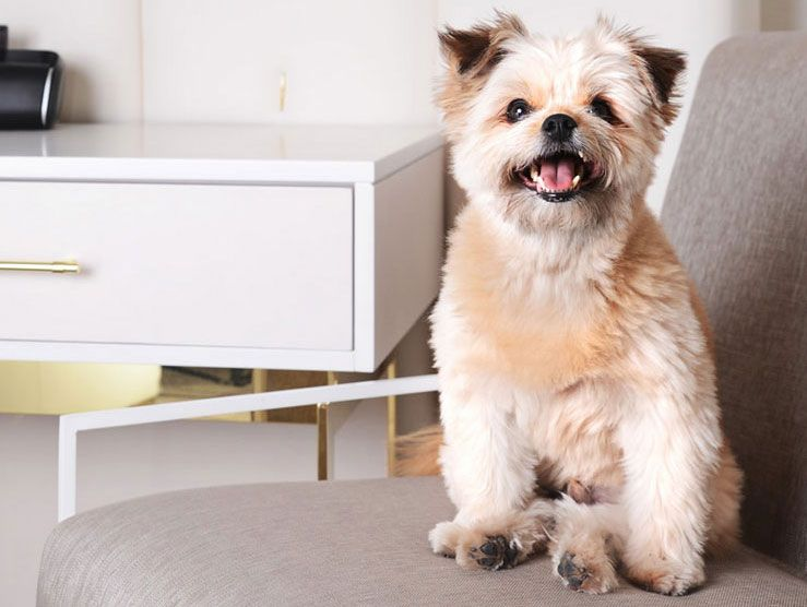 Hotel Amenities Pack Your Furry Pal Because The Cosmopolitan Is Pet Friendly