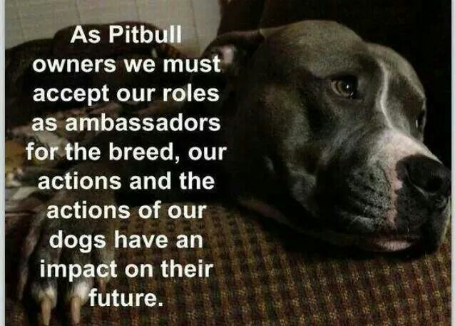 As Pitbull Owners We Must Accept Our Roles As Ambassadors For The