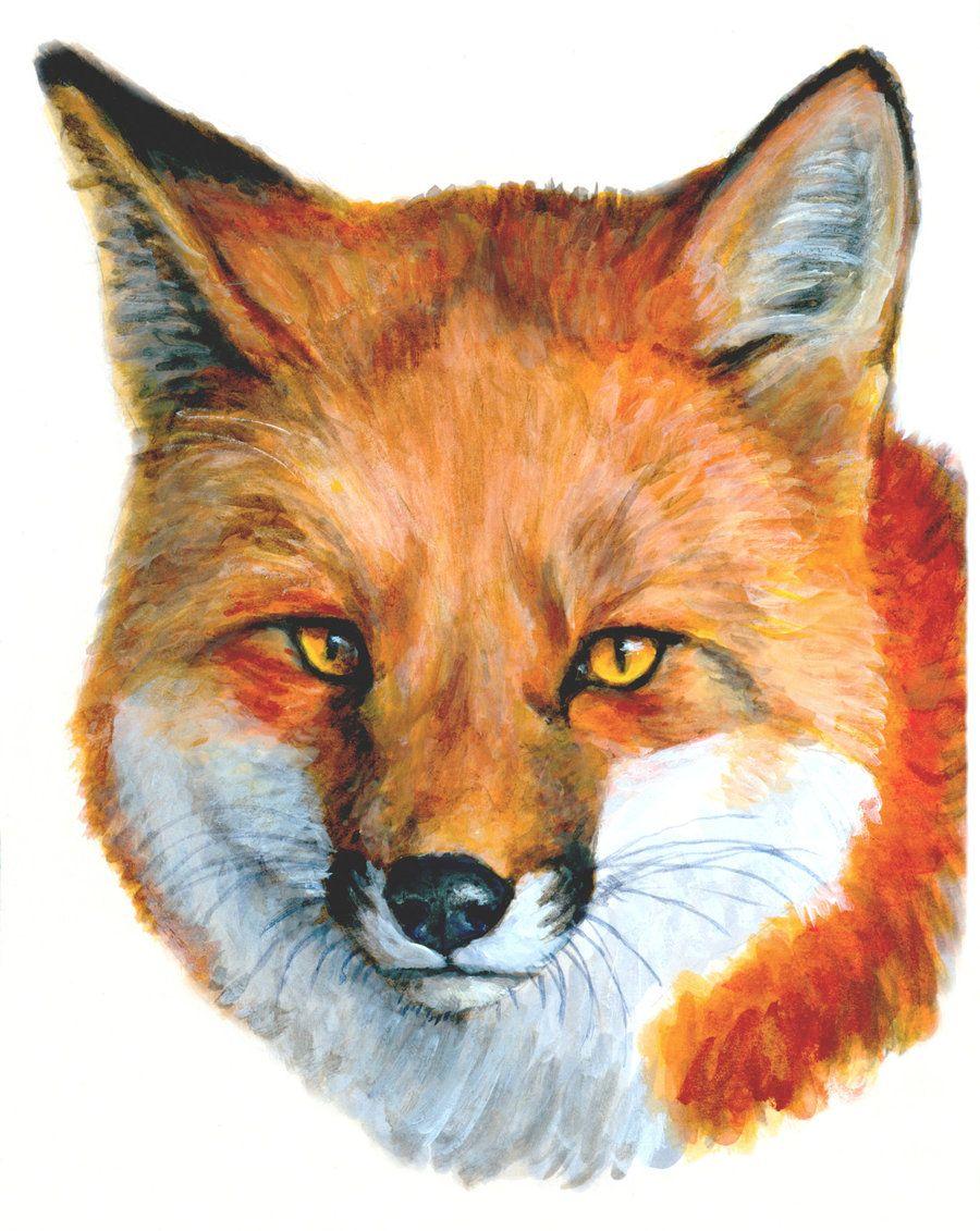Fox Coloring Jakarta Taken