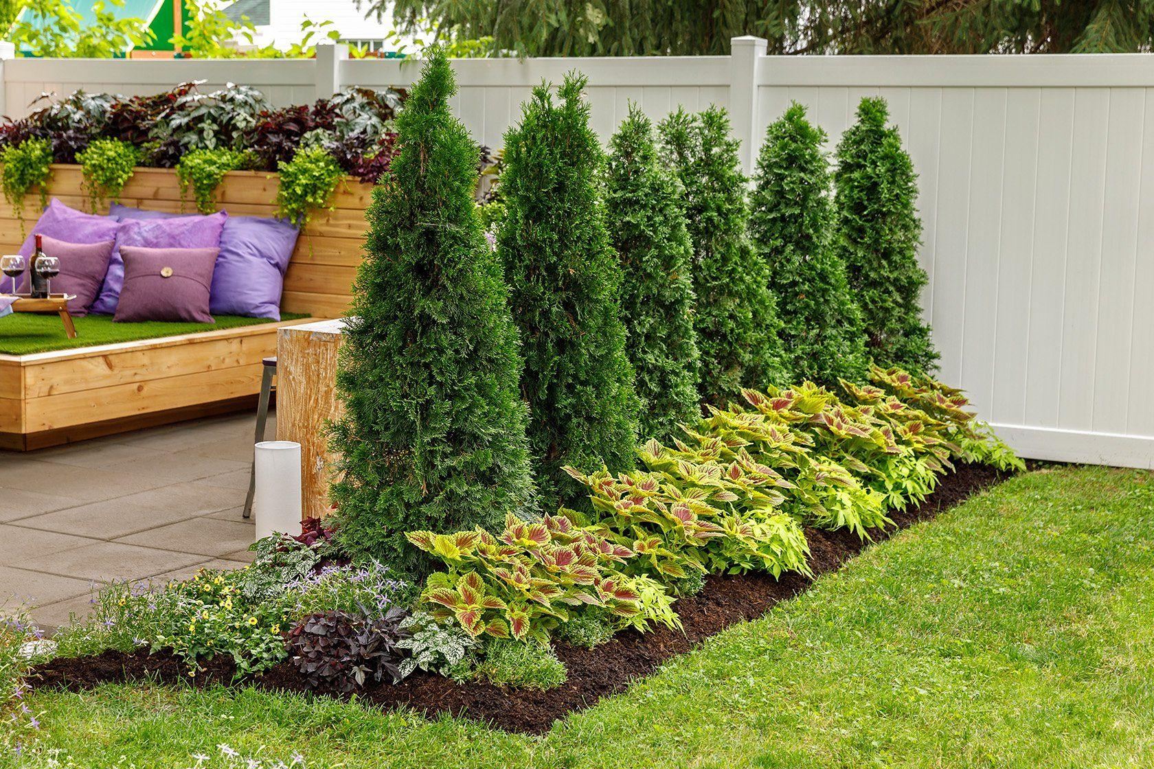 North Pole Arborvitae Thuja Privacy Landscaping Backyard Garden Design Backyard Landscaping Designs Backyard landscaping ideas with arborvitae