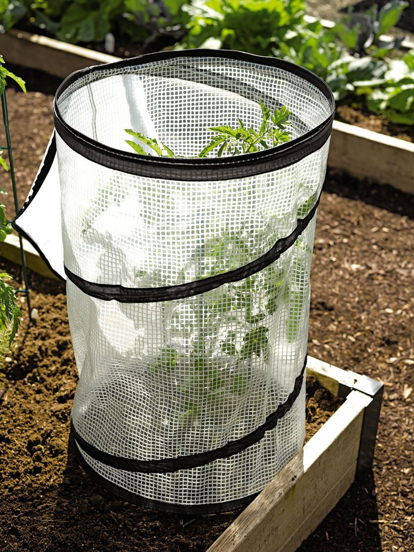Pop-Up Tomato Accelerator | Garden | Pinterest