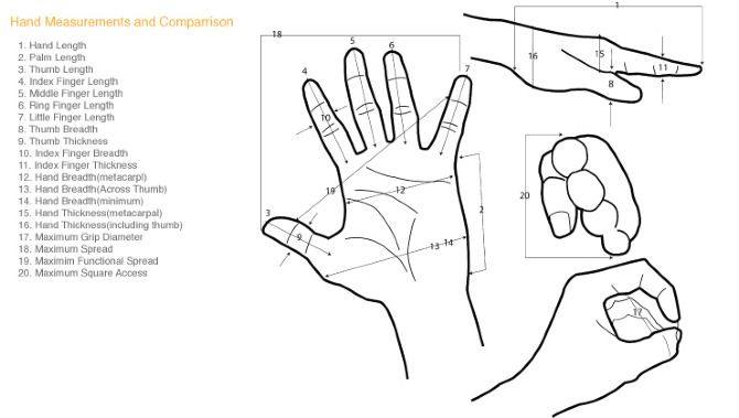 anatomical upper extremity planes
