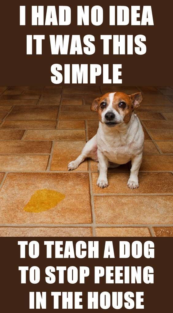 b5f35de6157c40b38f2fcdf08d5b6051 - How To Get A Dog To Stop Marking In House