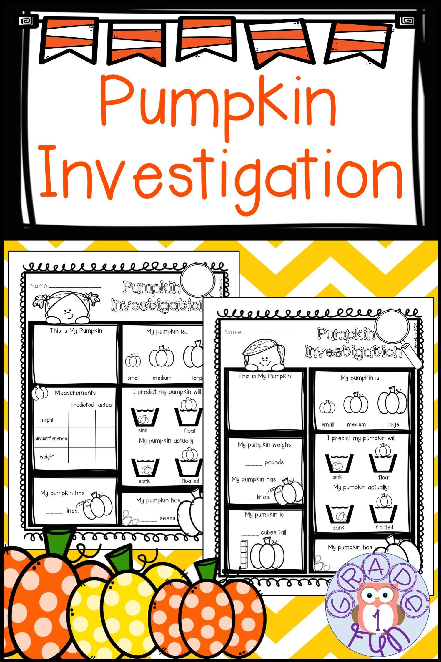 Pumpkin Investigation Sheet Science Skills Elementary Math Kindergarten Resources [ 2249 x 1499 Pixel ]