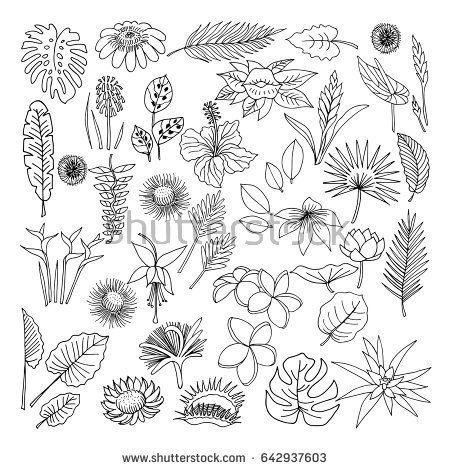 Easy To Draw Hawaiian Flowers Easy Flower Drawings Hawaiian