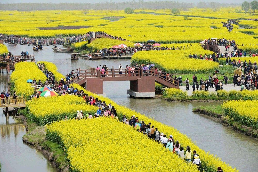 En este domingo 06 de abril 2014 de la foto, los turistas visitan el campo de colza para ver las flores en primavera en el campo de colza Qianduo en la ciudad de Taizhou, en la provincia oriental china de Jiangsu. (Foto: AP Photo)