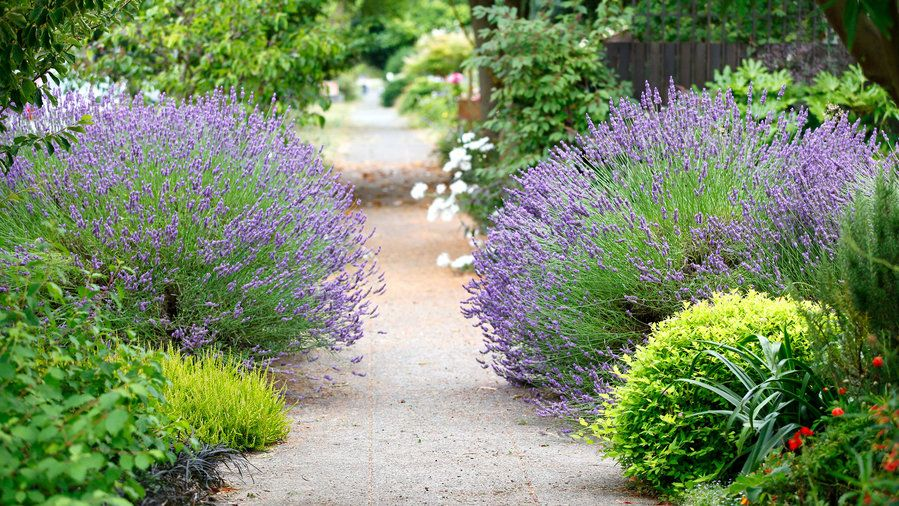 Fragrant passage | That narrow strip of land between the sidewalk and street—you know, the spot that the sprinklers don't quite reach—has a big impact on your home's curb appeal. Here are our favorite ideas to transform your hellstrip into a little patch of heaven