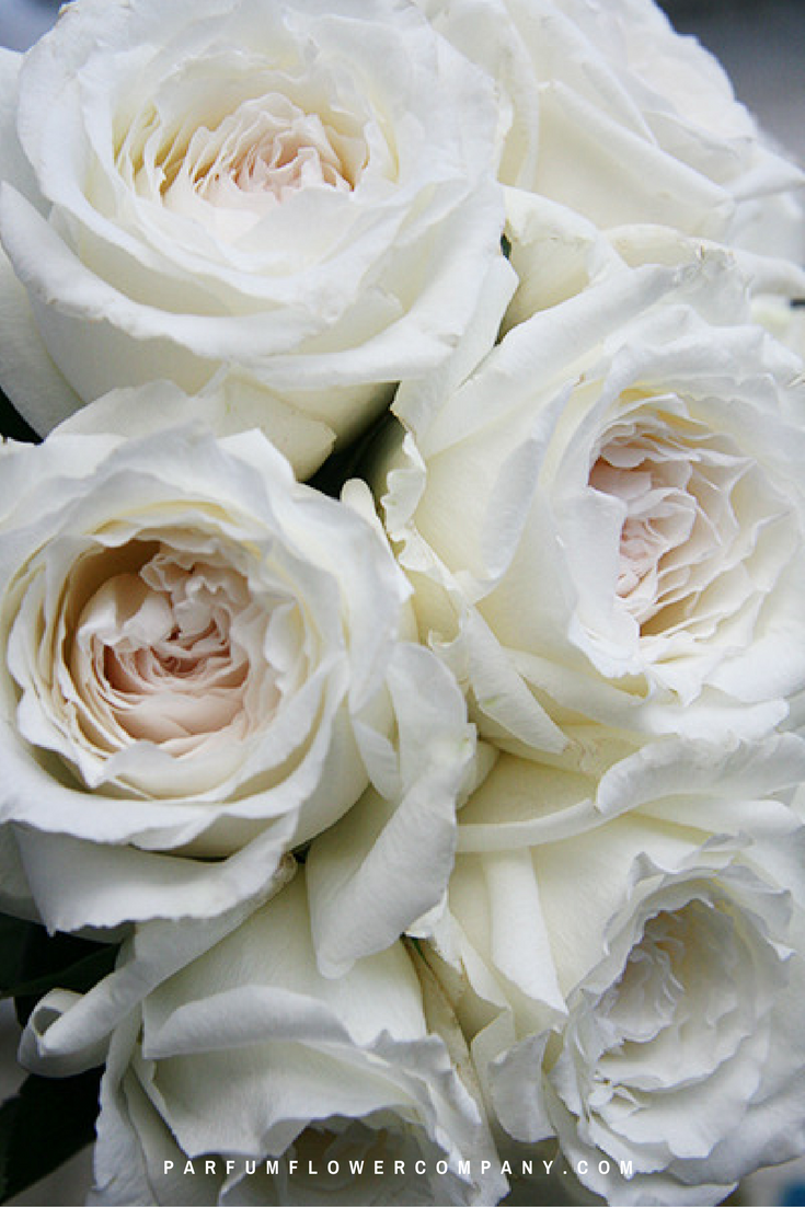 Princess Miyuki Garden Rose White Flowers Pinterest Flower