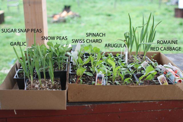 All I want to do is grow an edible garden. Via The Friendly Fox.