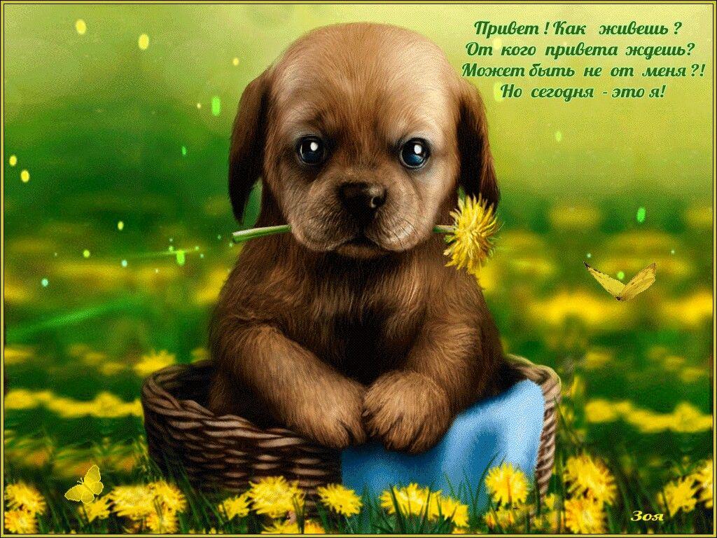 Доброе утро картинки прикольные смешные с надписью гифки с собаками