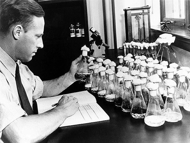 Penicillin How a miracle drug changed the fight against