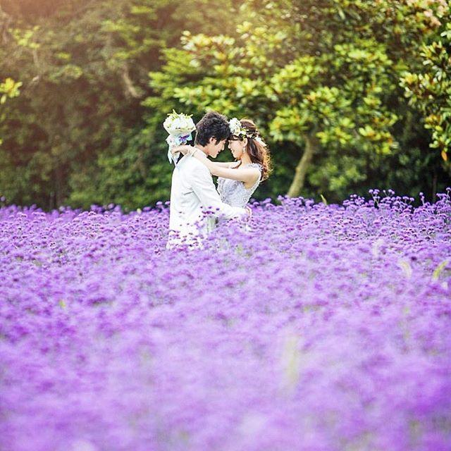 ラベンダー畑 で撮る ロマンチック な ウェディングフォト 大好評な お花畑 での ロケーションフォト 中でも人気の高い ラベンダー 畑 こちらのお写真は 淡路島 で撮られたそうです 淡路島にラベンダー ロケーションフォト ラベンダー畑