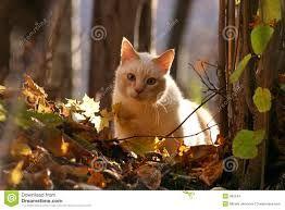 Risultati immagini per immagini di autunno