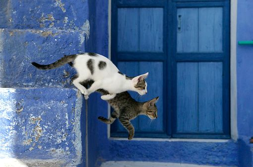 Two Tabby Greek Island Kittens Jumping Down Off Of Blue Stairs