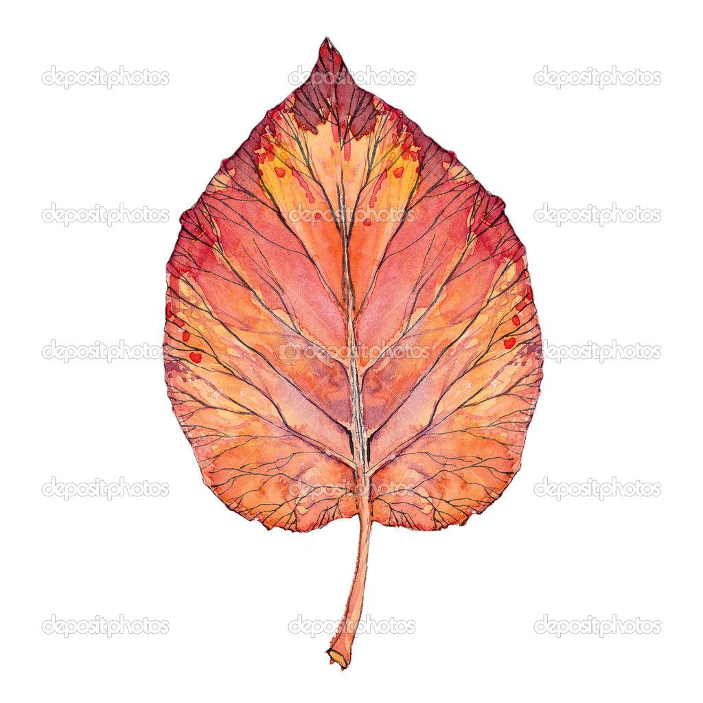 The Veins Of The Leaf Look Like A Tree Synchronicity Watercolour