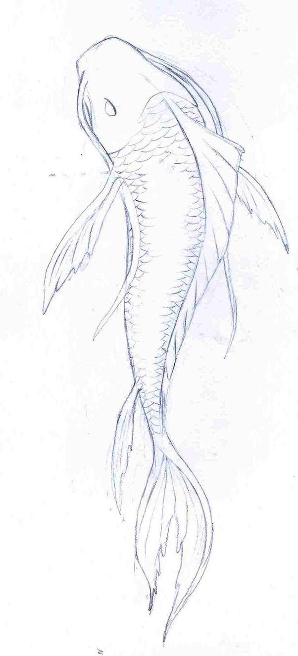 hight resolution of koi fish drawings in pencil google search