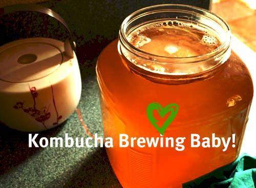 kombucha brewing instructions part one