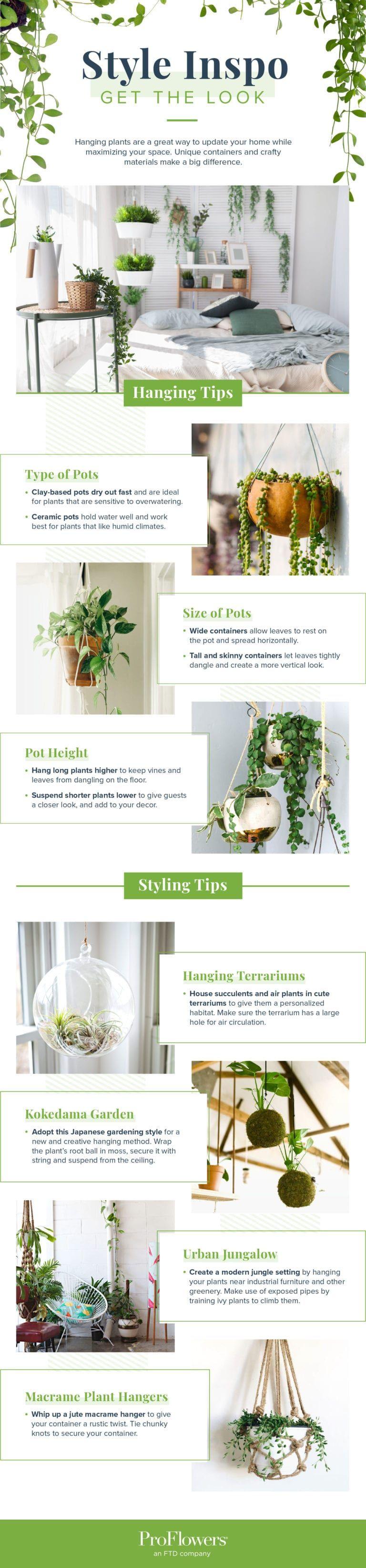 16 Indoor Hanging Plants to Decorate Your Home #hangingplantsindoor