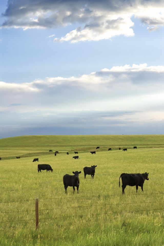 How To Raise Beef Cattle For Profit On A Small Farm Ehow Cattle Farming Farm Animals Beef Cattle