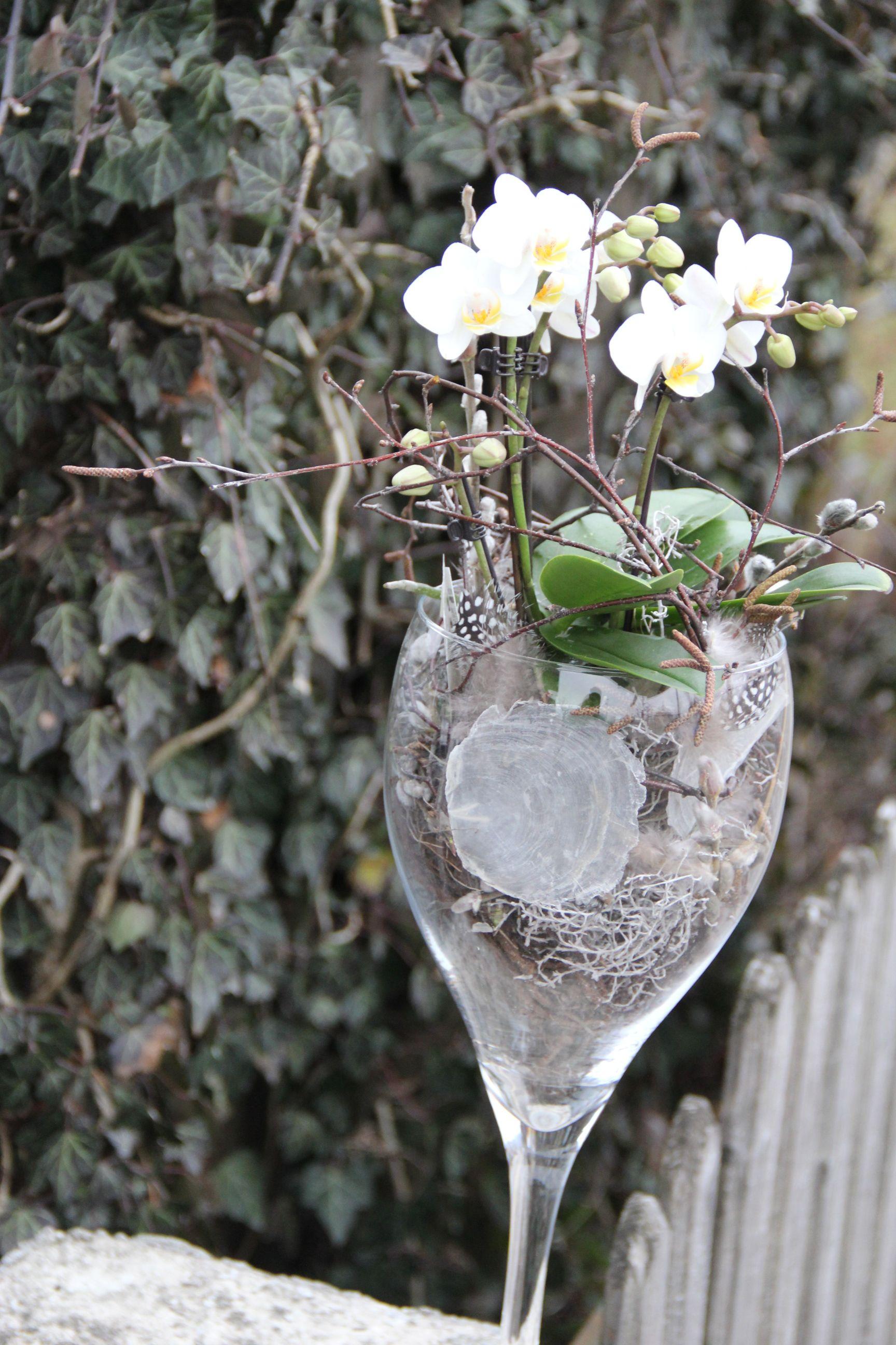 wundersch ne weisse orchidee im glas orchideen die vielfalt von den 1000 veschiedenen. Black Bedroom Furniture Sets. Home Design Ideas