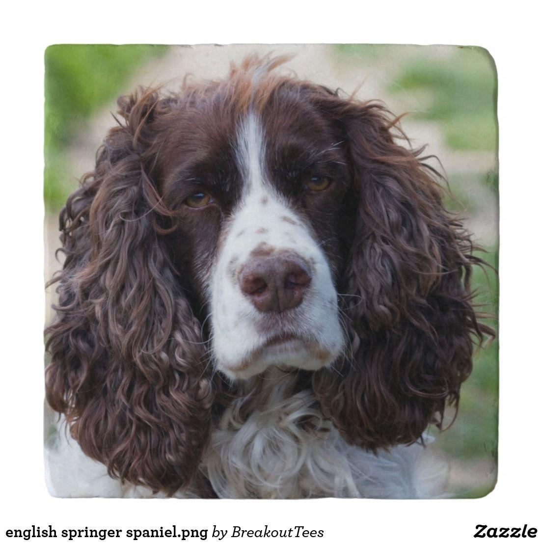English Springer Spaniel Png Trivet Zazzle Com In 2020 Springer Spaniel English Springer Spaniel English Springer