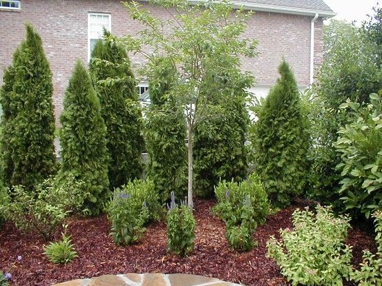 Another backyard privacy idea backyard ideas for Backyard privacy landscaping trees