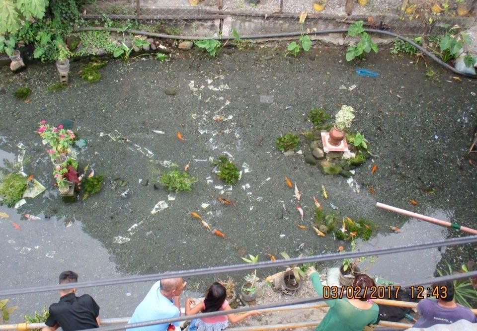 filthy canal cleaned and transformed into natural koi pond
